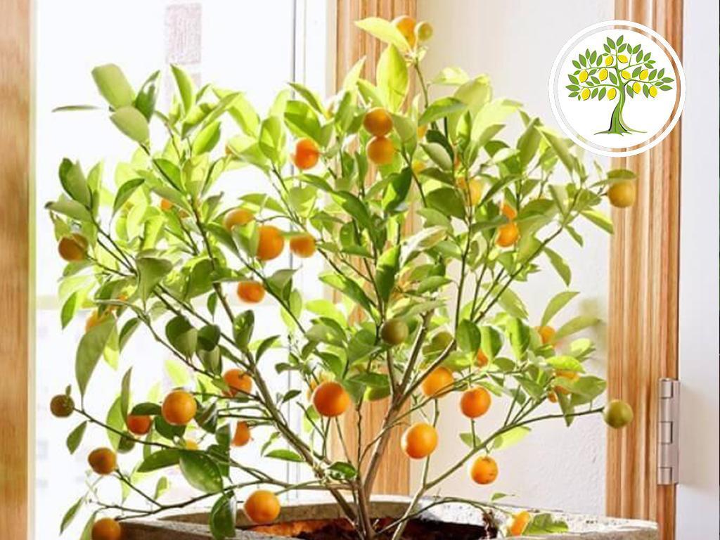 плодовитое дерево