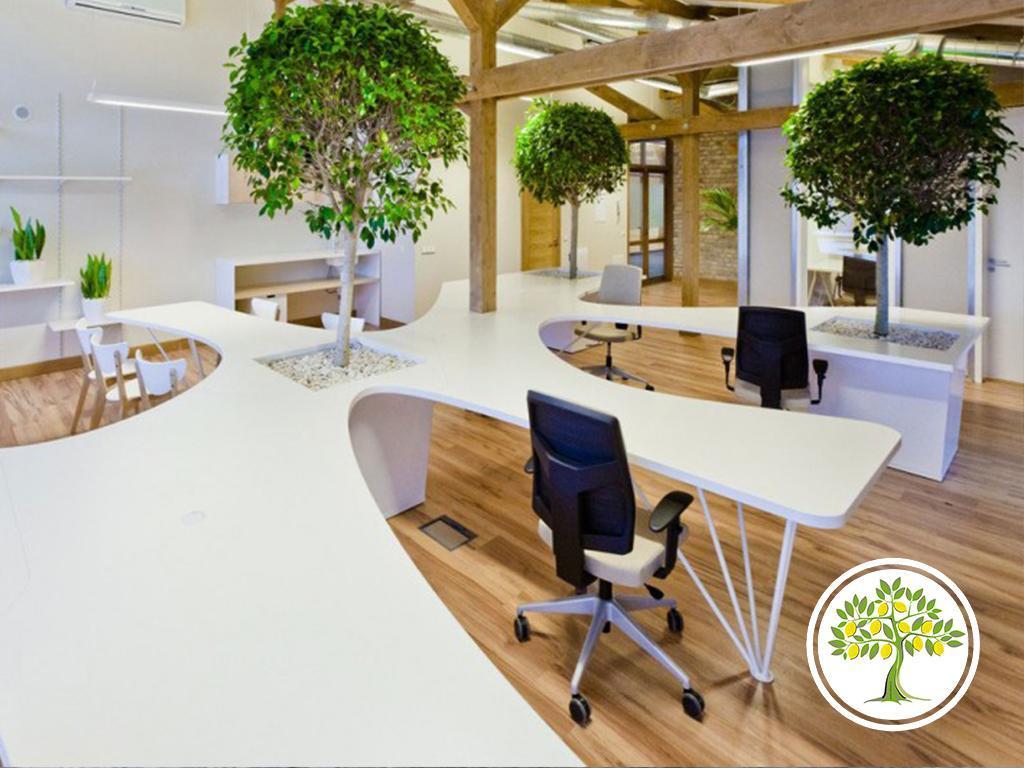 растения в офис