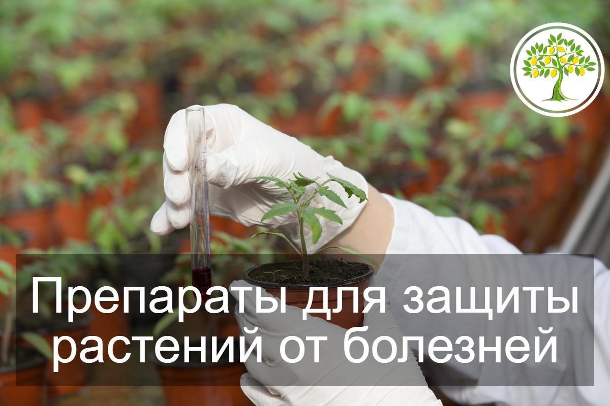 фотозащитить растительность от болезней
