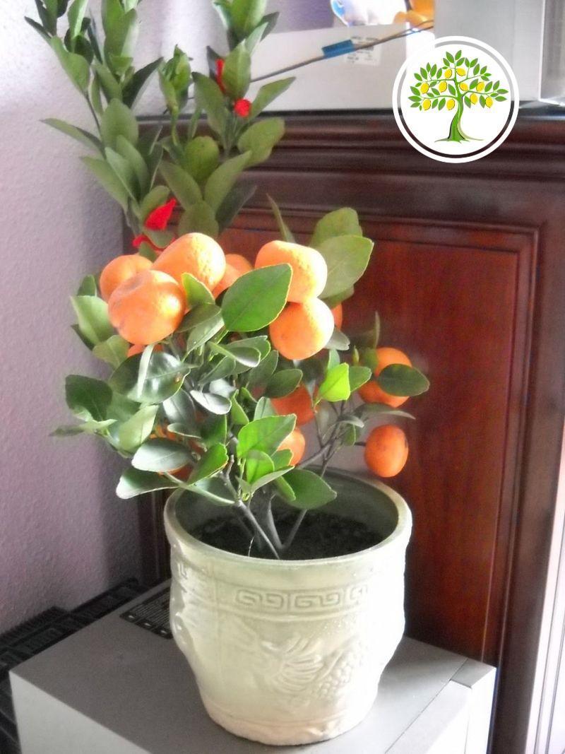 уход за растениями для дома