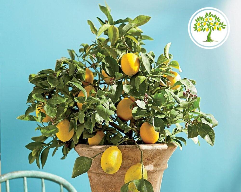фото плодов на дереве