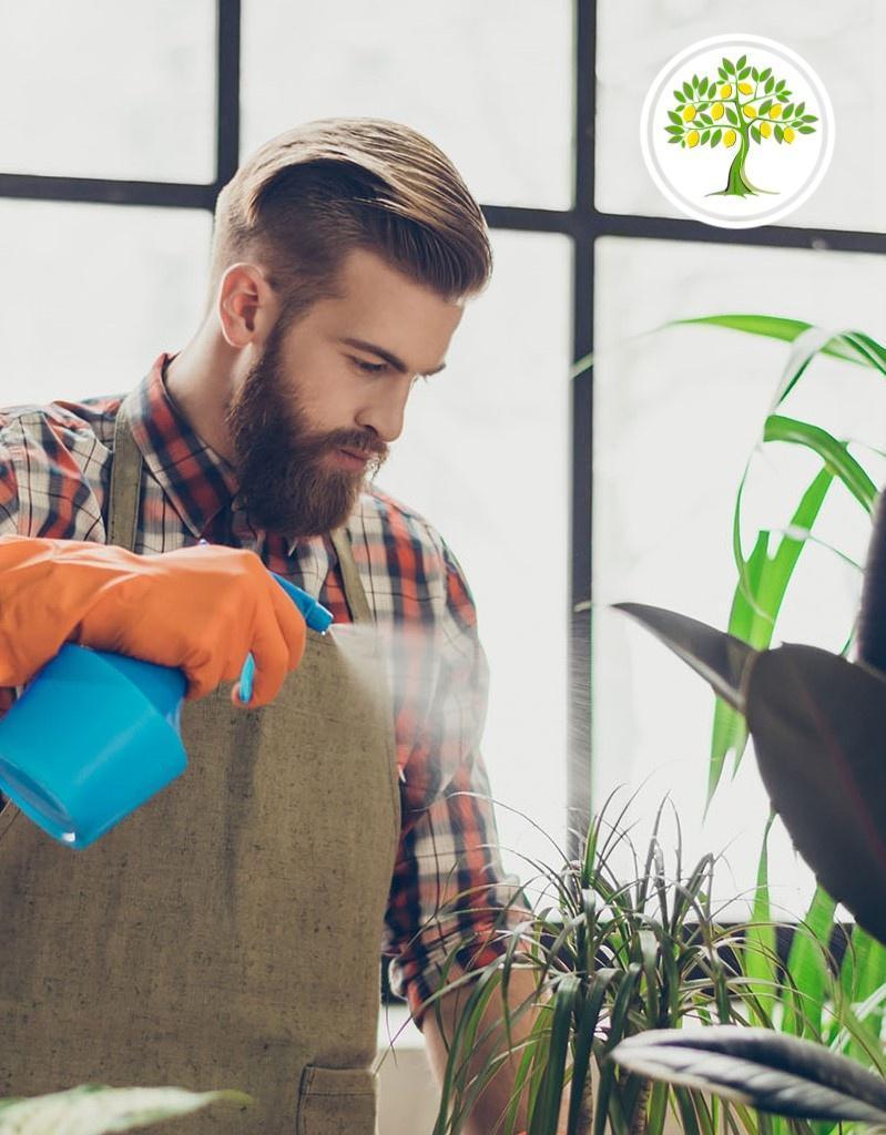 полив растений фото