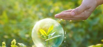 Информация о фиторегуляторах для растений
