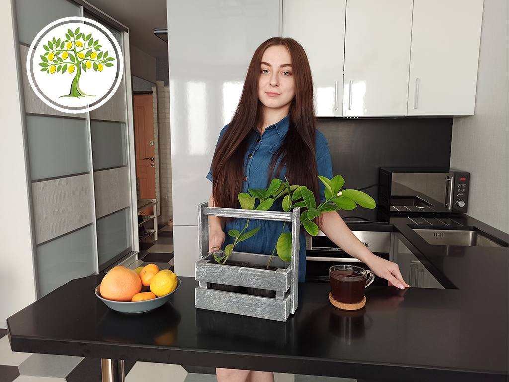 Плодоносящие цитрусовые