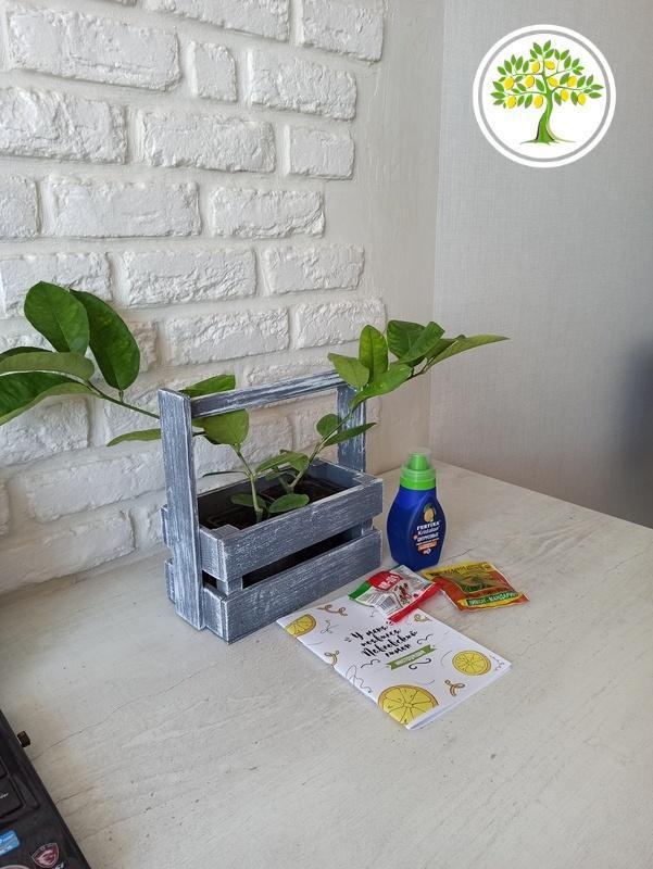 Цитрусовые растения из Питомника фото