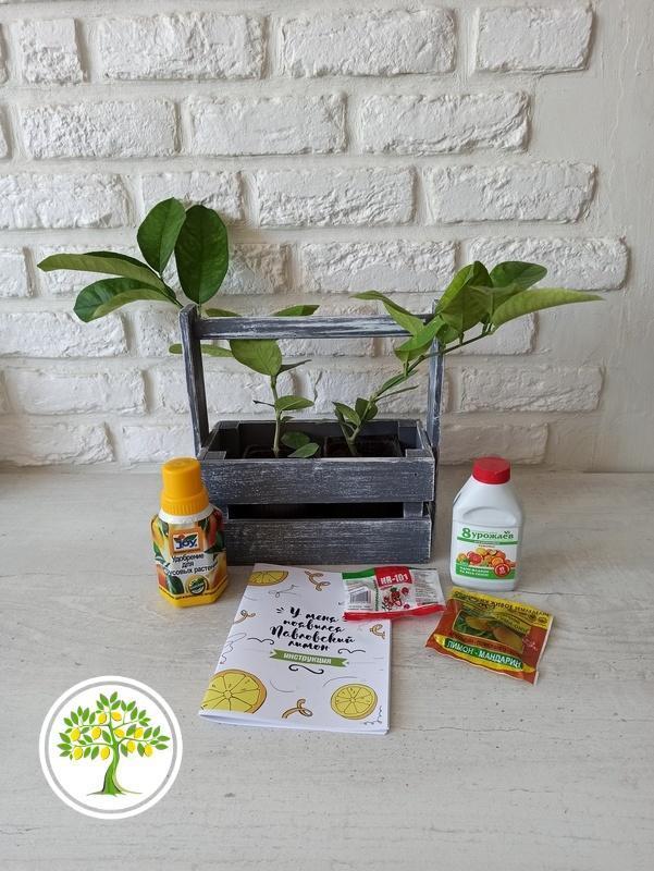 растения для дома и офиса