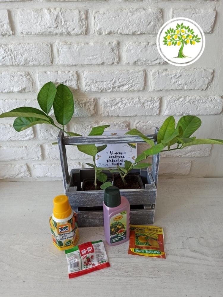 Домашние горшечные растения