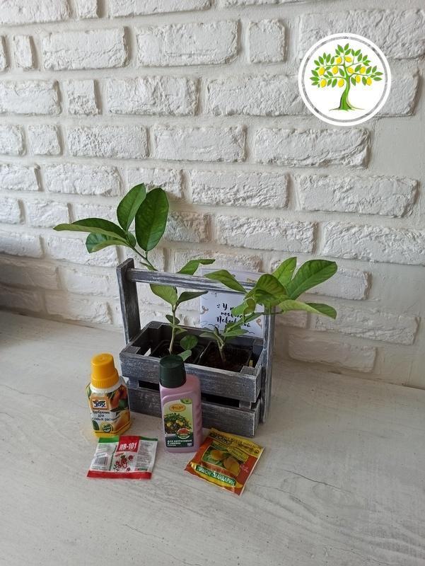 Комнатные экзотические растения и