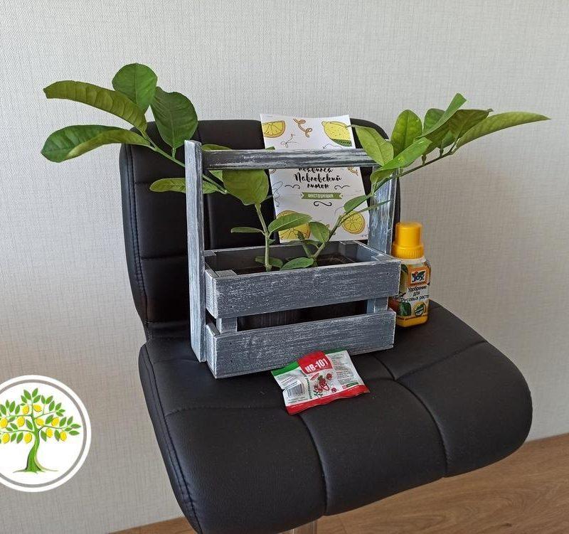 фото эксклюзивные домашние горшечные растения