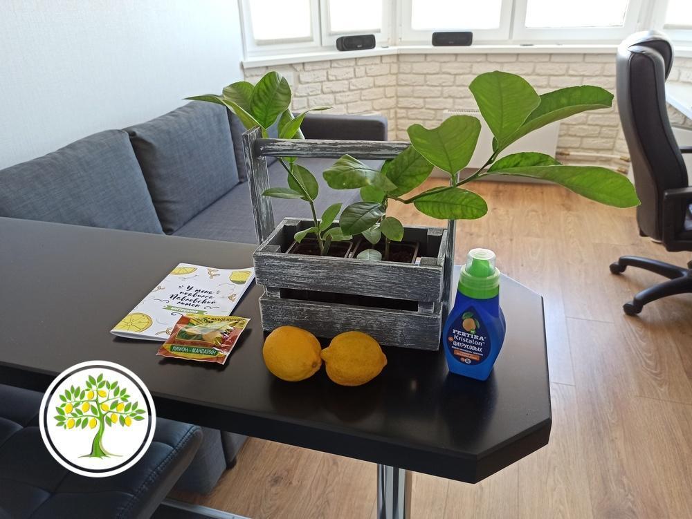 фото Растения для дома и офиса