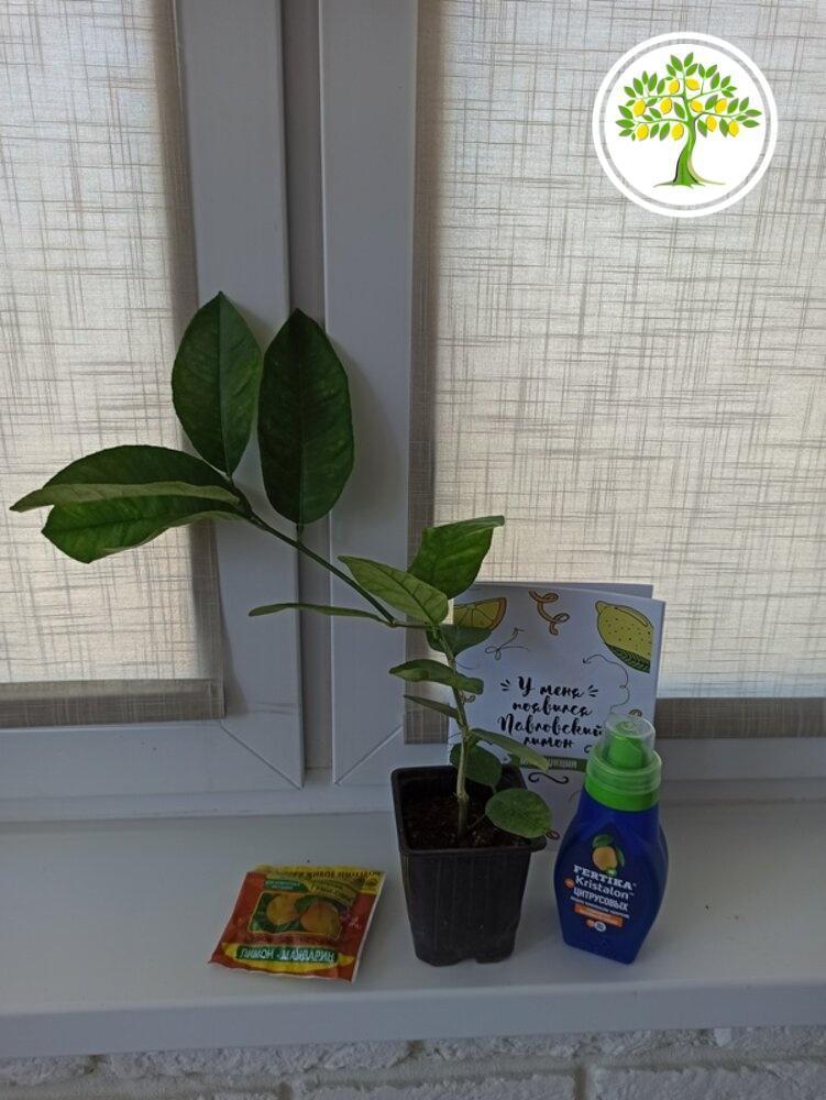 фото домашние горшечные растения