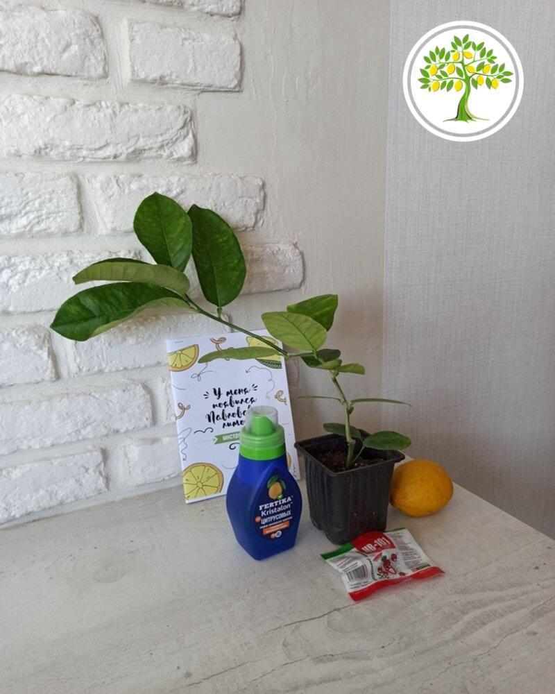 эксклюзивные домашние горшечные растения