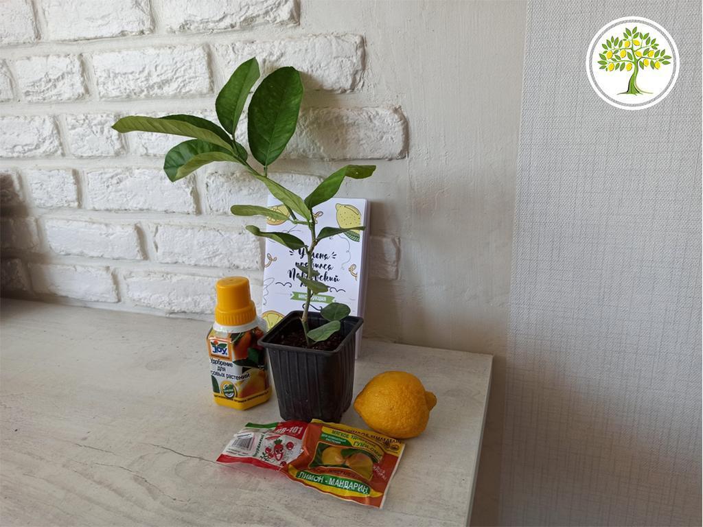 фото комнатные экзотические растения