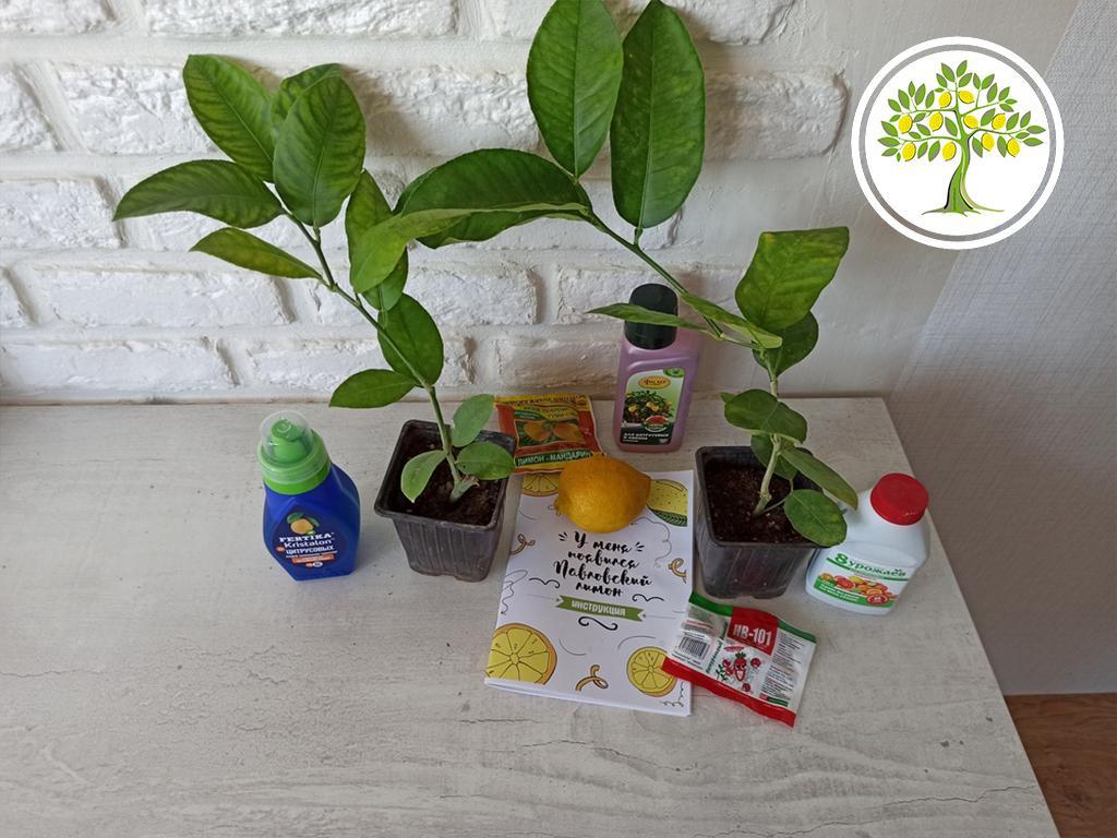 Лимонное и Мандариновое дерево