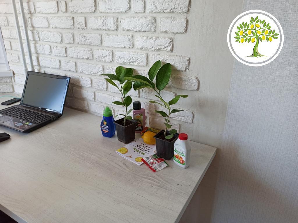 растения офиса