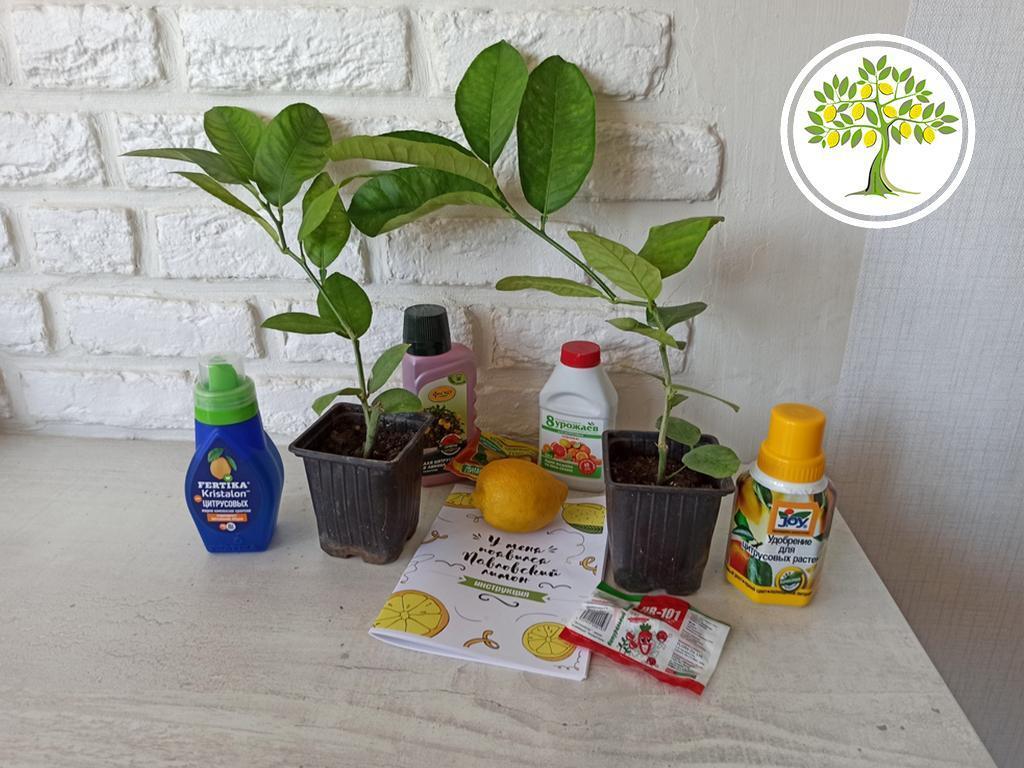 растения подарок