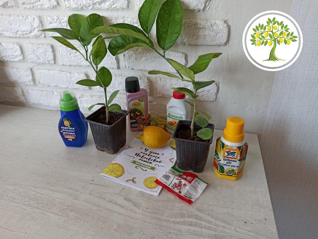 домашние горшечные растения и цветы