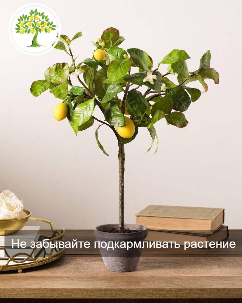 фото Крона лимона