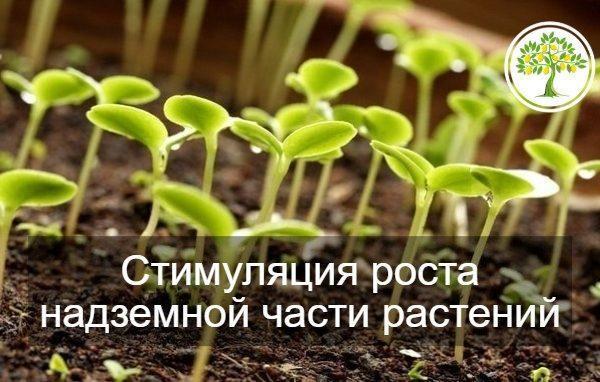 фото рост надземной части растений