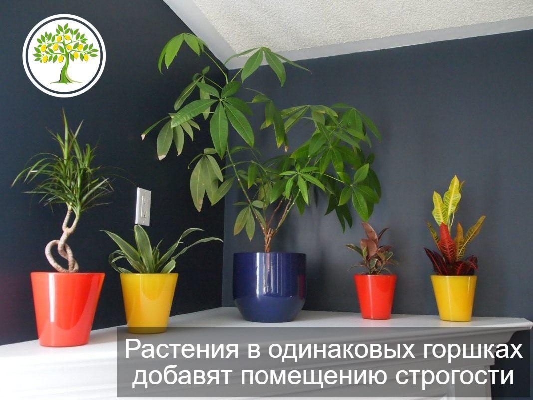 картинка растения в горшках