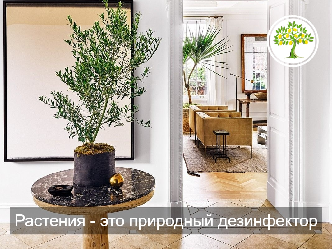 картинка растения дома