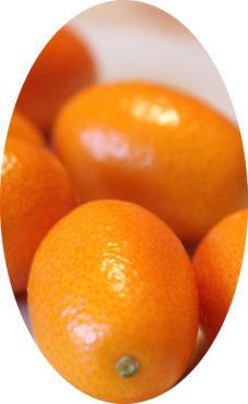 плод Кумкват Кинкан