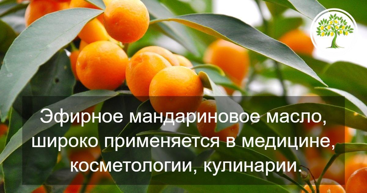 картинка применение мандарина