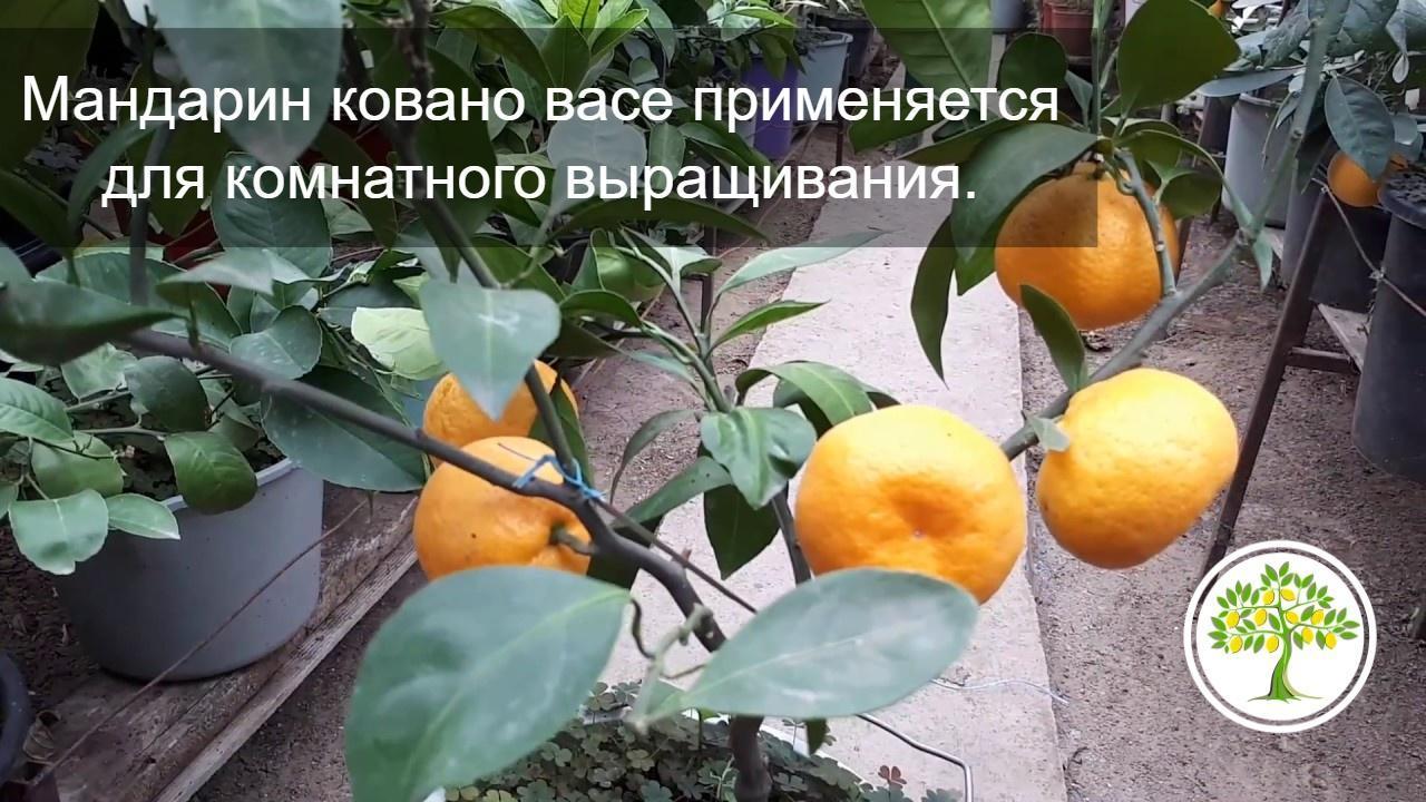 плоды на дереве фото