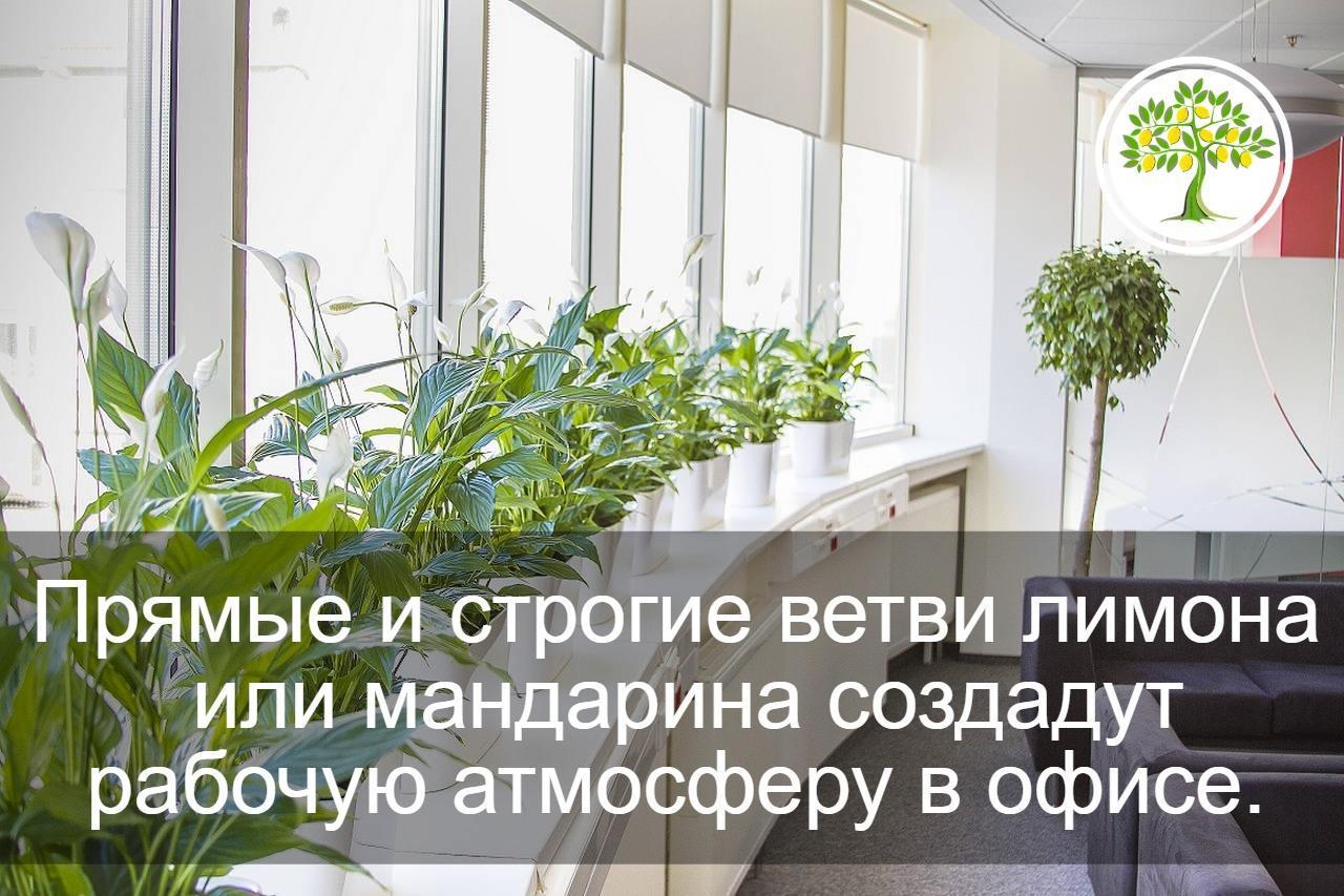 картинка растения в офисе