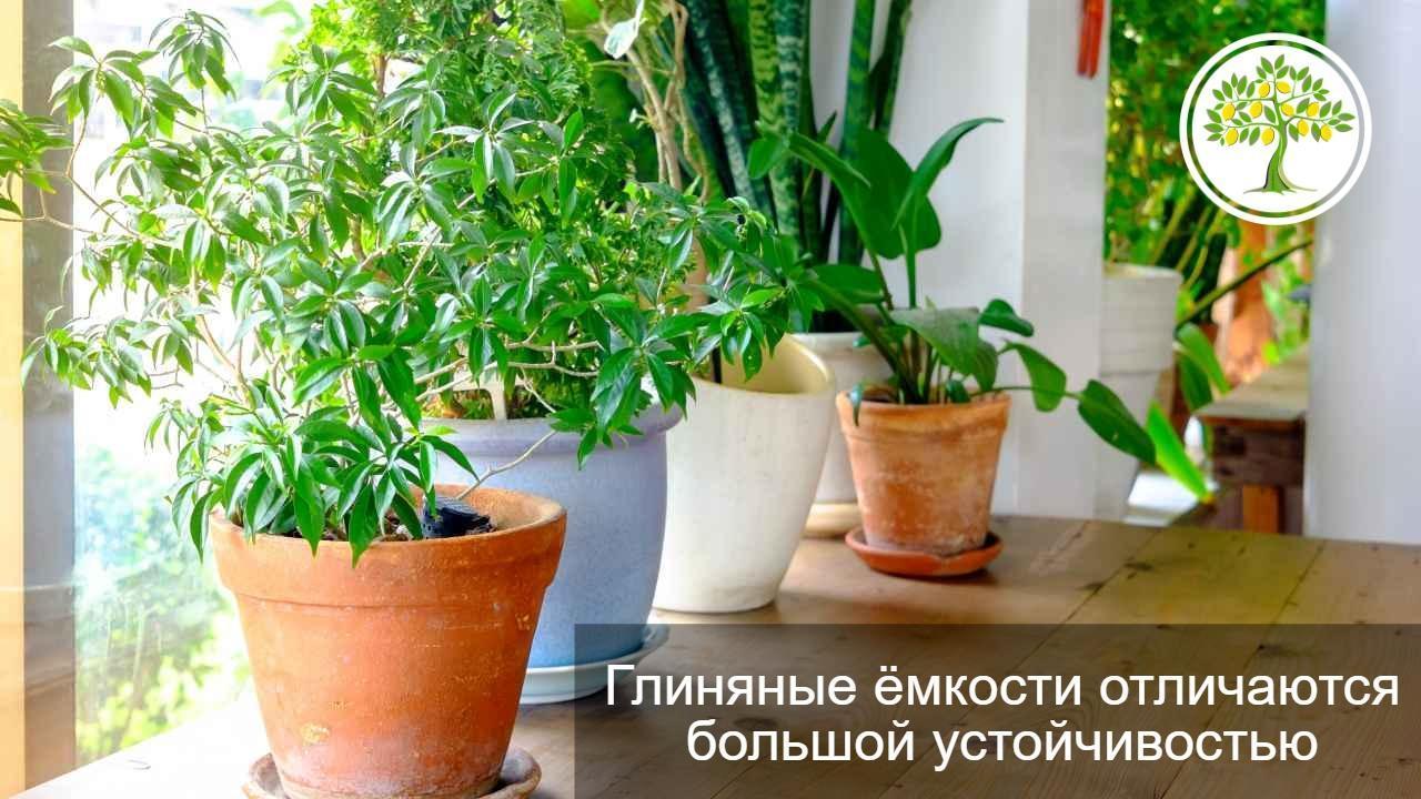 горшок для растения