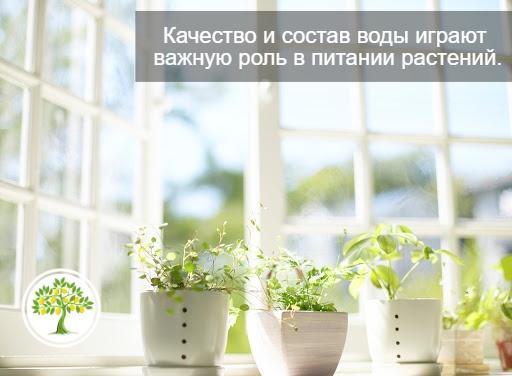 питание растения