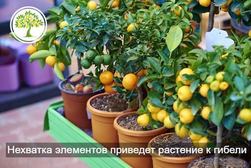 удобрение лимона