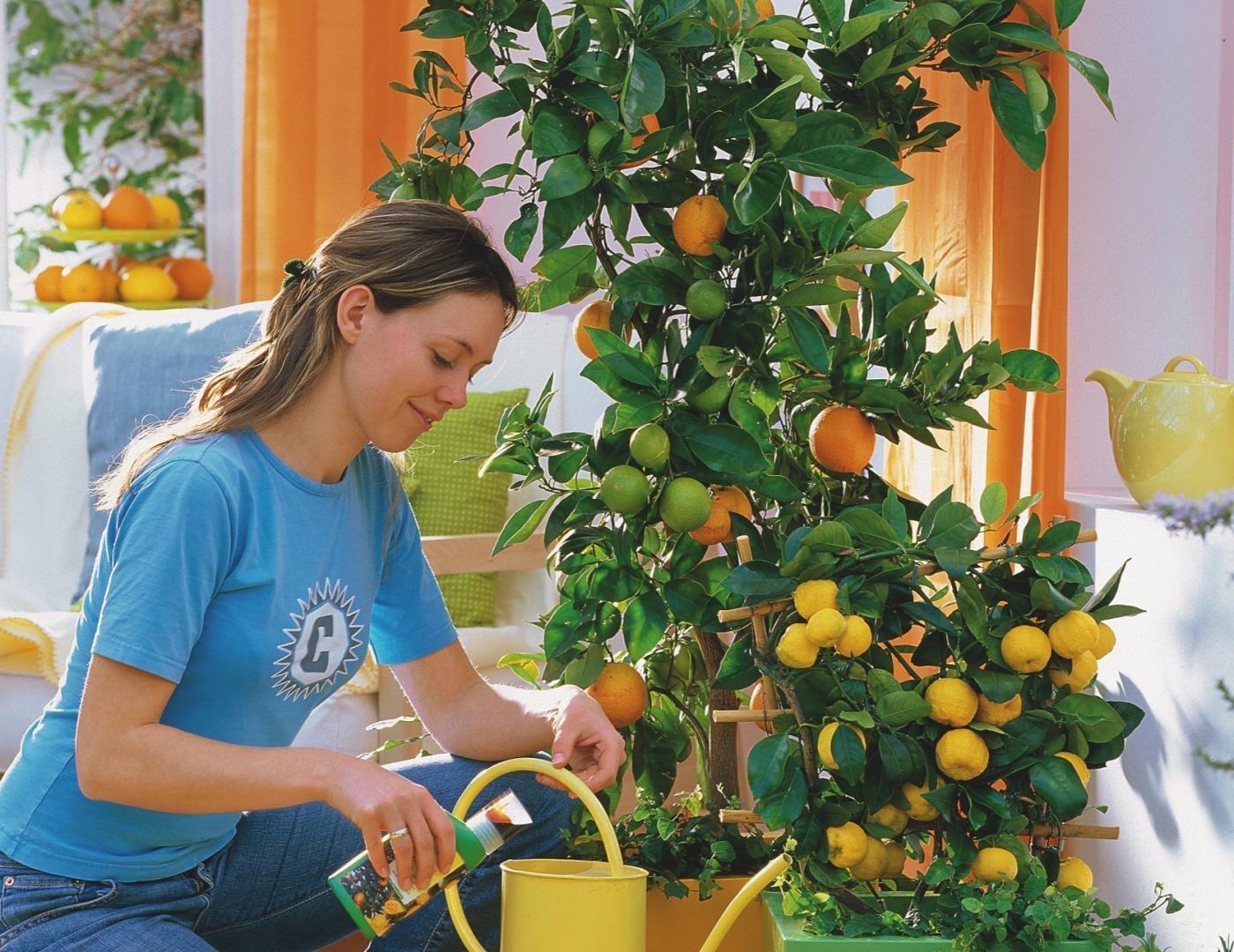 Красивая девушка поливает лимон